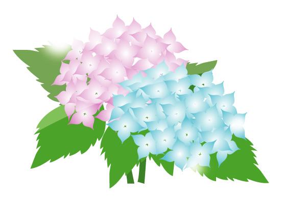 紫陽花 イラスト に対する画像結果